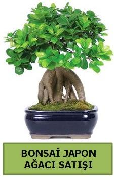 Bonsai japon ağacı satışı  Kastamonu çiçek satışı