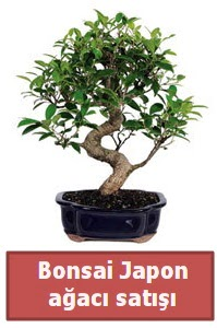 Japon ağacı bonsai satışı  Kastamonu çiçek siparişi sitesi