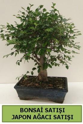 Minyatür bonsai japon ağacı satışı  Kastamonu çiçek gönderme sitemiz güvenlidir