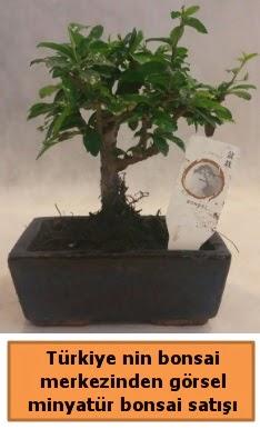 Japon ağacı bonsai satışı ithal görsel  Kastamonu çiçek yolla