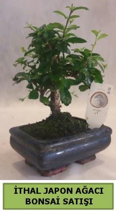 İthal japon ağacı bonsai bitkisi satışı  Kastamonu çiçekçi telefonları