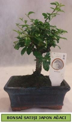Minyatür bonsai ağacı satışı  Kastamonu çiçek gönderme