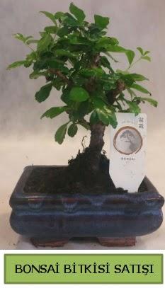 Bonsai ithal görsel minyatür japon ağacı  Kastamonu ucuz çiçek gönder
