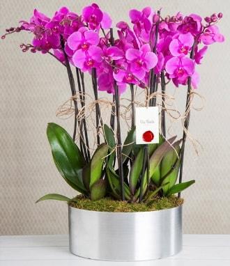 11 dallı mor orkide metal vazoda  Kastamonu çiçek gönderme sitemiz güvenlidir