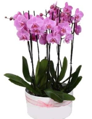 Beyaz seramik içerisinde 7 dallı mor orkide  Kastamonu çiçekçi telefonları