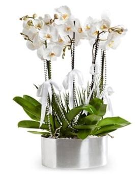 Beş dallı metal saksıda beyaz orkide  Kastamonu çiçek yolla