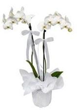 2 dallı beyaz orkide  Kastamonu güvenli kaliteli hızlı çiçek