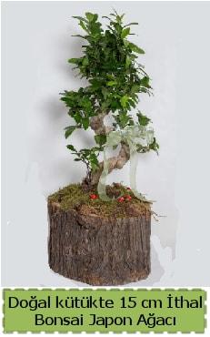 Doğal kütükte İthal bonsai japon ağacı  Kastamonu çiçek gönderme