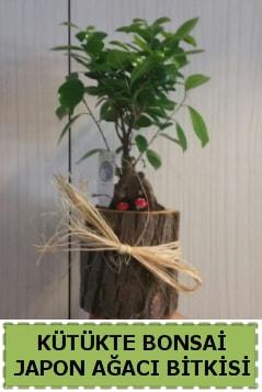 Kütük içerisinde doğal bonsai ağacı  Kastamonu çiçekçi telefonları