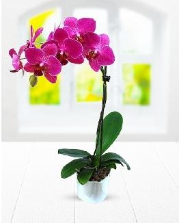 Tek dallı mor orkide  Kastamonu çiçek satışı