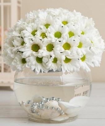 Fanusta beyaz Papatya  Kastamonu çiçek satışı