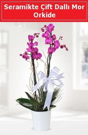 Seramikte Çift Dallı Mor Orkide  Kastamonu anneler günü çiçek yolla