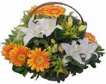 Kastamonu online çiçekçi , çiçek siparişi  sepet modeli Gerbera kazablanka sepet
