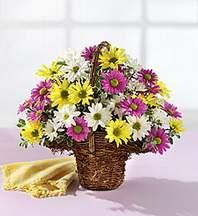 Kastamonu çiçekçiler  Mevsim çiçekleri sepeti